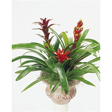 p2021_8inBromeliad_Whitewash_Clay_W